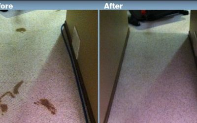 Pet Stains are Easy to Remove with Steam